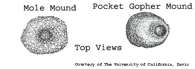 Comparison of mole and gopher mounds